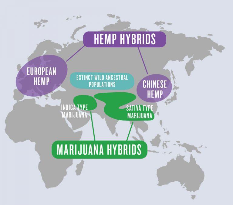 Orígenes del Cannabis