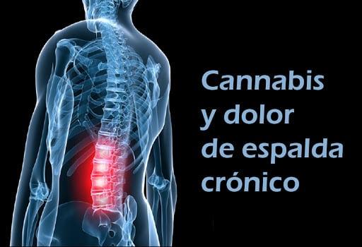 cannabis y dolor de espalda